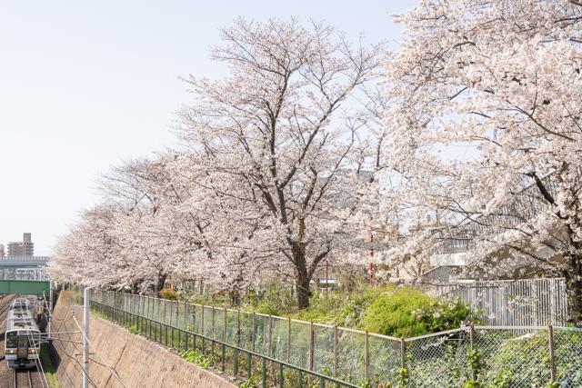 電車と桜の写真
